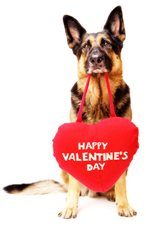 dog-with-valentines-day-heart